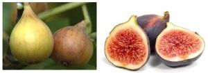 Figs-