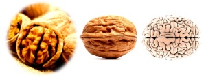 Walnut-Brain